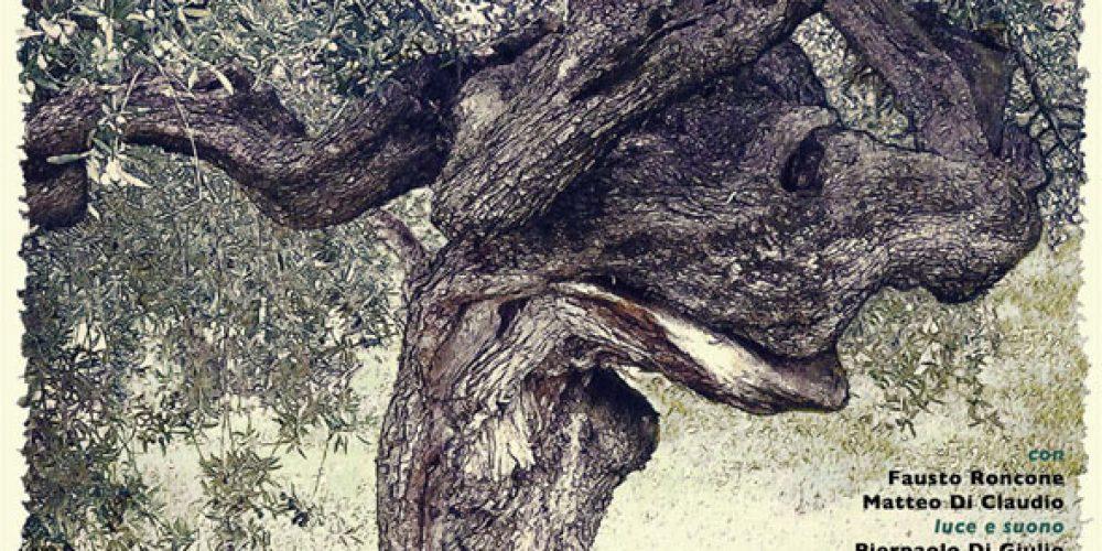 Mio nonno l'olivo